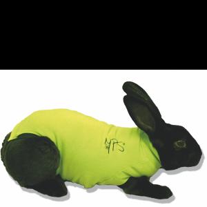 medical pet shirt rabbit